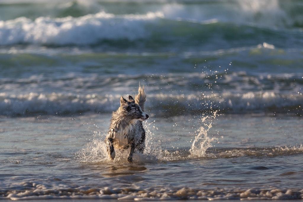 Dog Photography-16