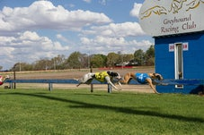 Greyhound Racing - Coonamble - 2018
