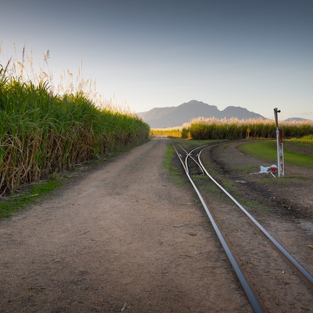Canefields - North Qld