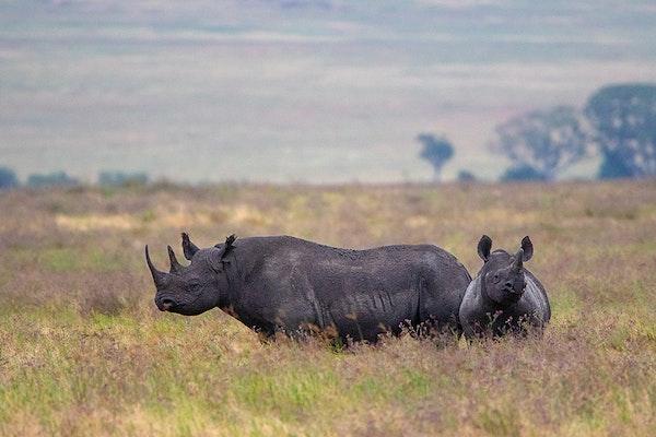 Africa 2018_Ngorongoro_0902s