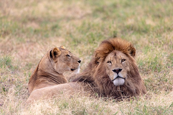 Africa 2018_Ngorongoro_0966