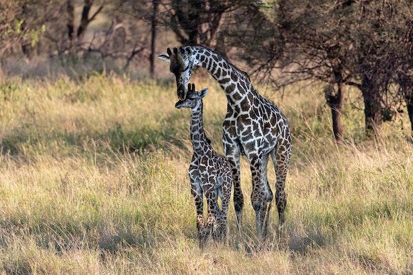 Africa 2018_Serengeti_1504a