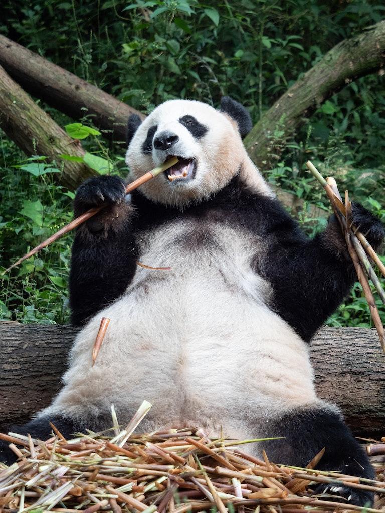 PSC_Panda-1-21407 - OLYMPUS DIGITAL CAMERA