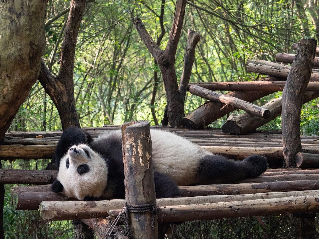 PSC_Panda-2-21541 - OLYMPUS DIGITAL CAMERA