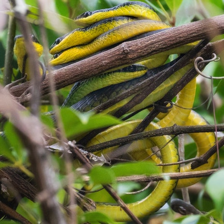 Dating on the Daintree