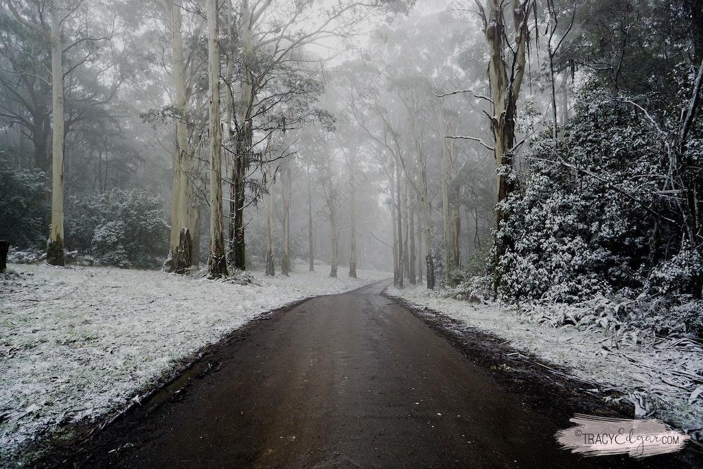 Mt Macedon | A Winter Wonderland #2 - Lions Head Road