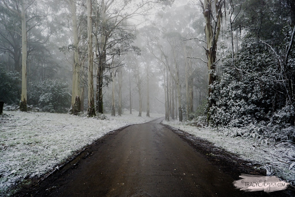 Mt Macedon | A Winter Wonderland #2 - Lions Head Road
