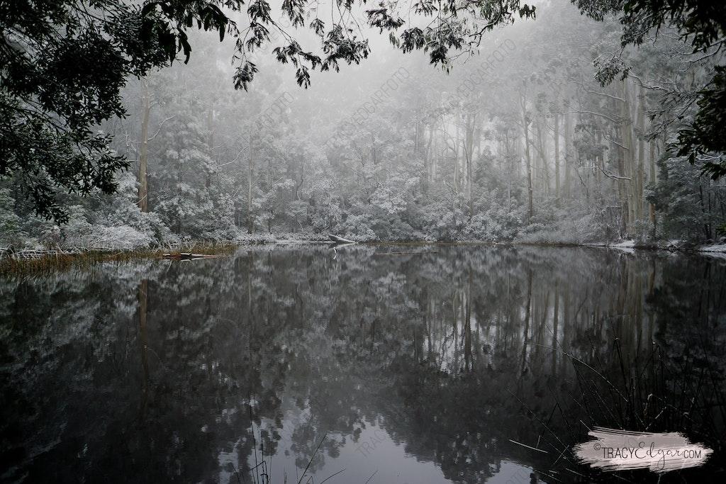 Mt Macedon | A Winter Wonderland #9 - Sanatorium Lake