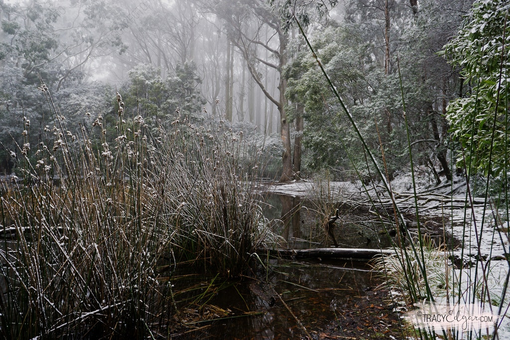 Mt Macedon | A Winter Wonderland #10 - Sanatorium Lake
