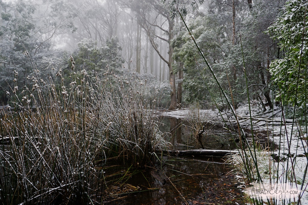 Mt Macedon | A Winter Wonderland #10 - Sanatorium Lake