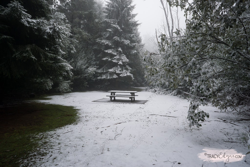 Mt Macedon | A Winter Wonderland #12 - Sanatorium Picnic Ground | Mount Macedon, Macedon Regional Park, Macedon Ranges, Victoria, Australia