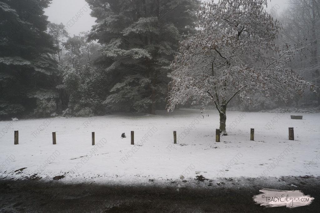 Mt Macedon | A Winter Wonderland #17 - Sanatorium Picnic Ground
