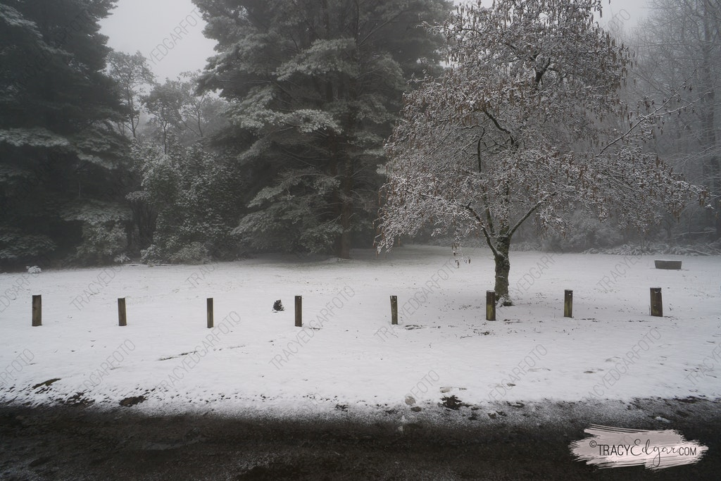 Mt Macedon | A Winter Wonderland #17 - Sanatorium Picnic Ground