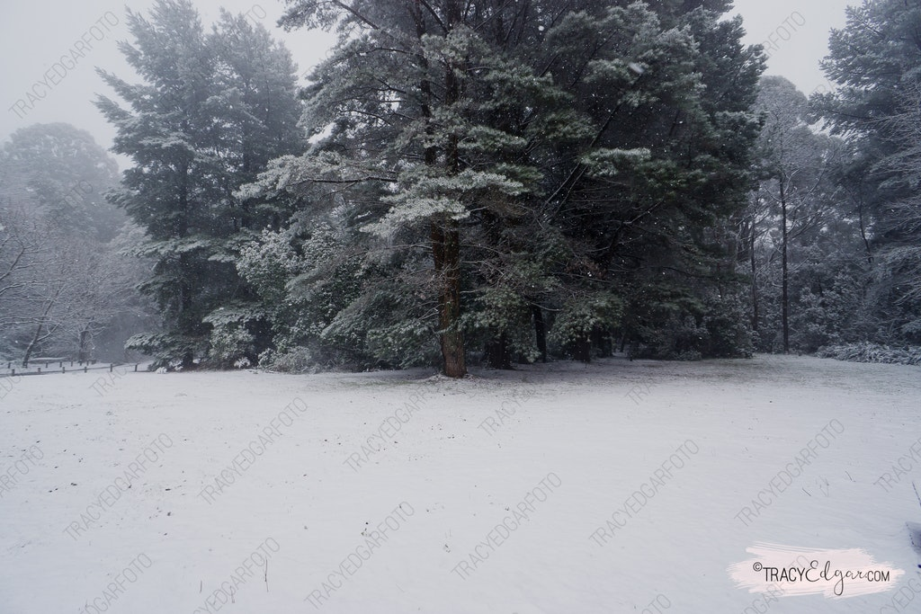 Mt Macedon | A Winter Wonderland #19 - Sanatorium Picnic Ground