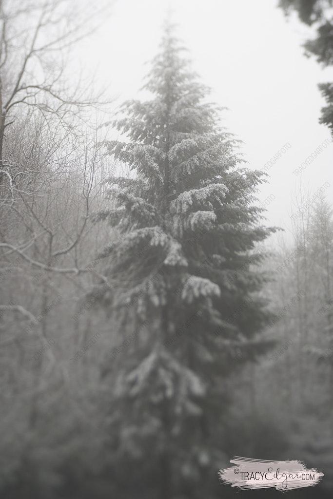 Mt Macedon | A Lensbaby Winter Wonderland #2 - Sanatorium Picnic Ground