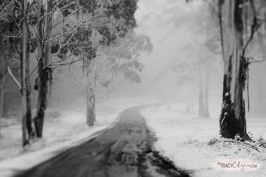 Mt Macedon | A Lensbaby Winter Wonderland #11 - Lions Head Road