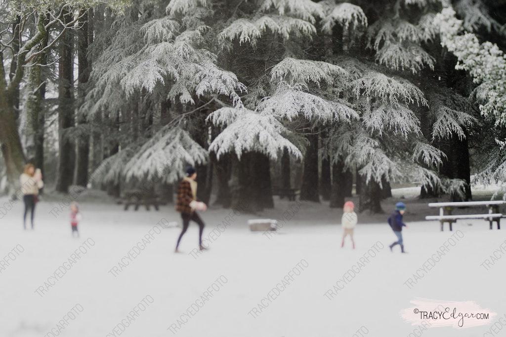 Mt Macedon | A Lensbaby Winter Wonderland #22 - Photobombed - McGregors Picnic Ground