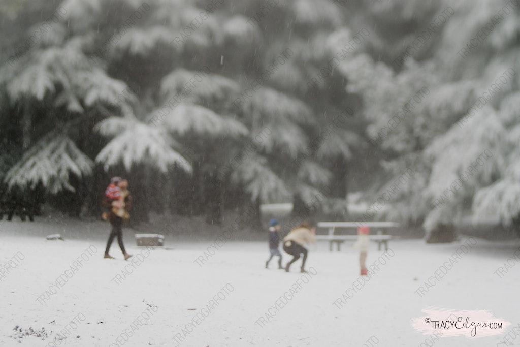 Mt Macedon | A Lensbaby Winter Wonderland #25 - Photobombed - McGregors Picnic Ground