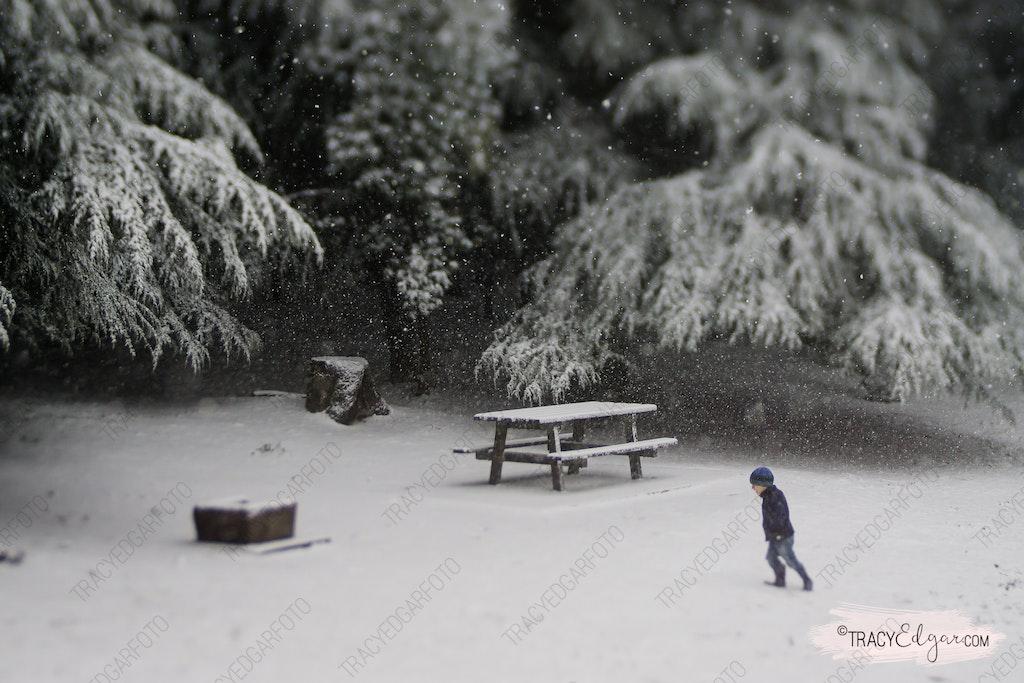 Mt Macedon | A Lensbaby Winter Wonderland #27 - Photobombed - McGregors Picnic Ground