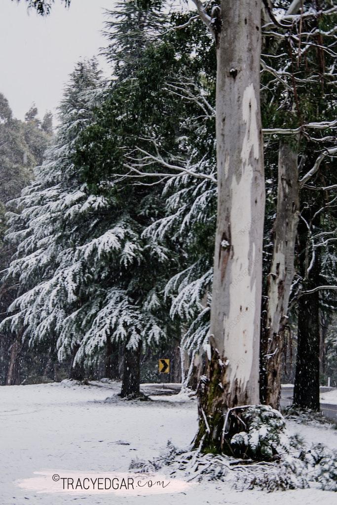 Snowfall | Mt Macedon | Mt Macedonowfall #32