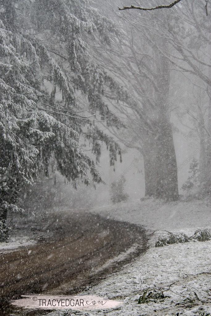 Snowfall | Mt Macedon #8