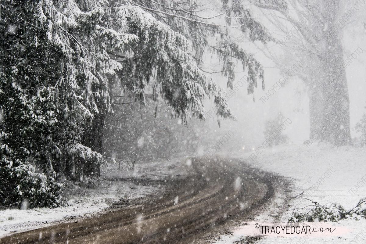 Snowfall | Mt Macedon #4