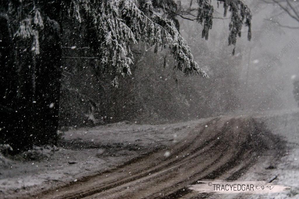 Snowfall | Mt Macedon #11