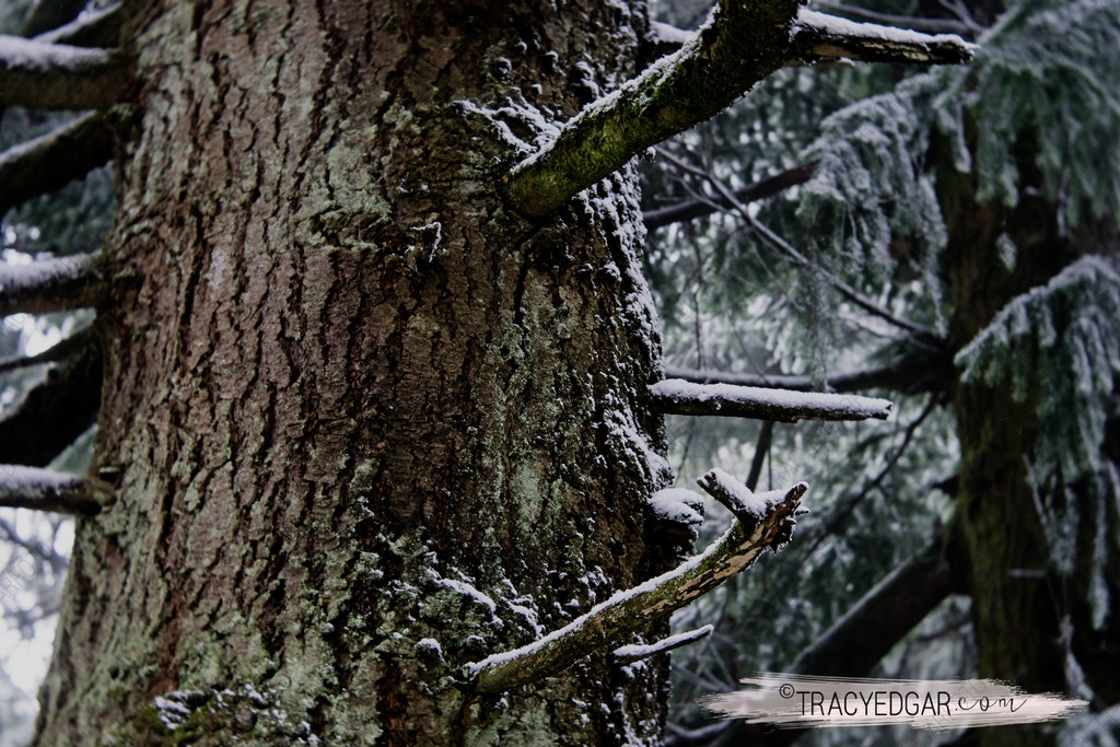Snowfall | Mt Macedon #17