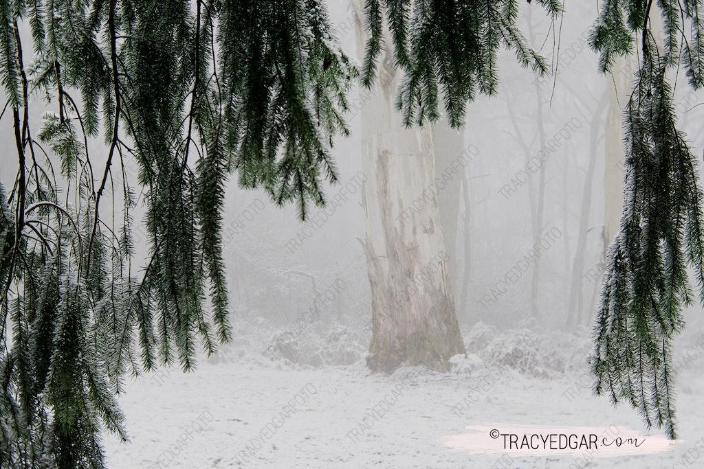 Snowfall | Mt Macedon #7
