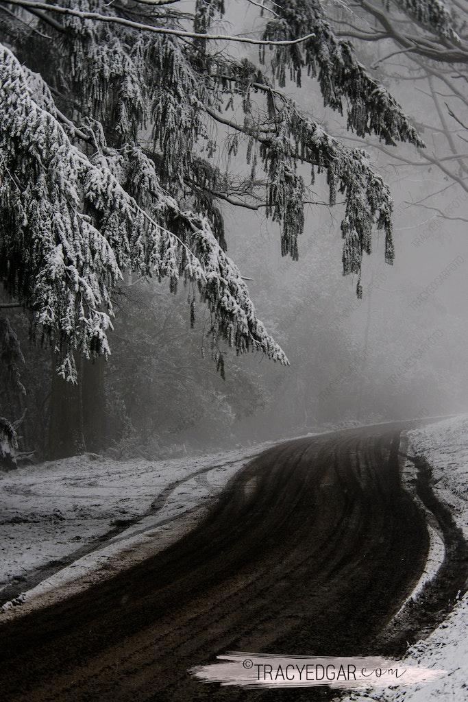 Snowfall | Mt Macedon #15