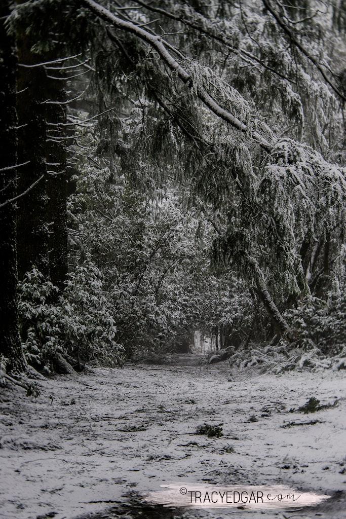 Snowfall | Mt Macedon #14