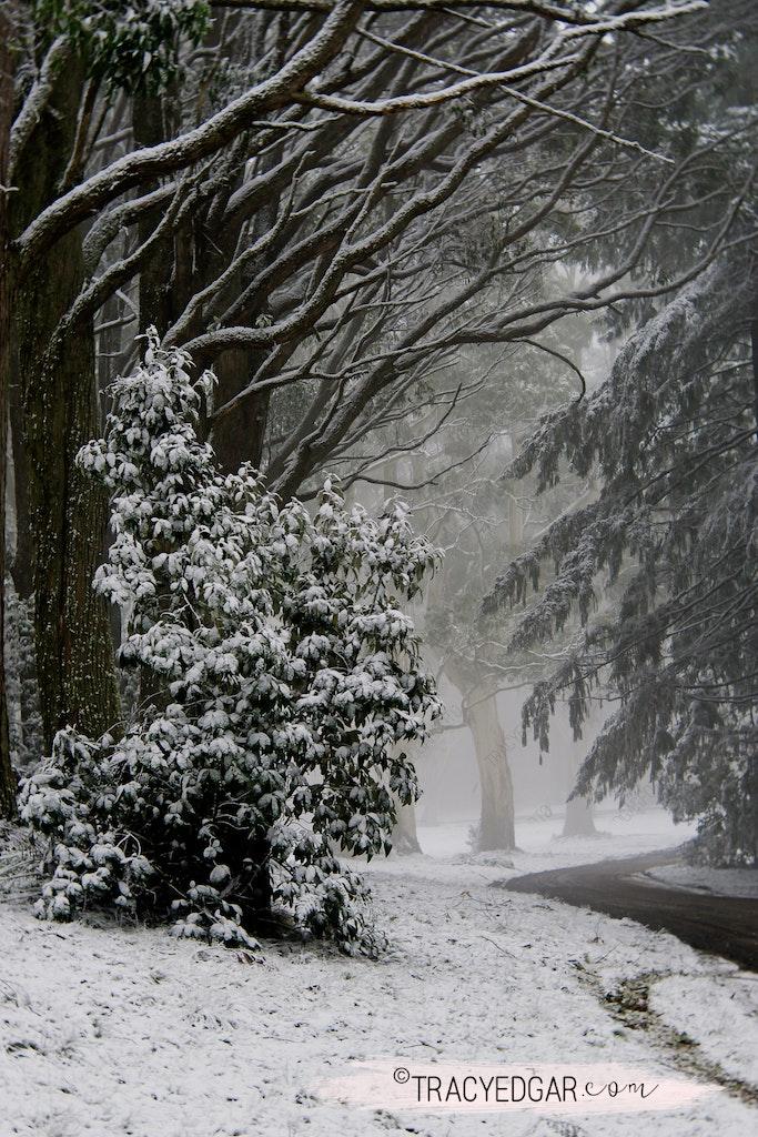 Snowfall | Mt Macedon #20