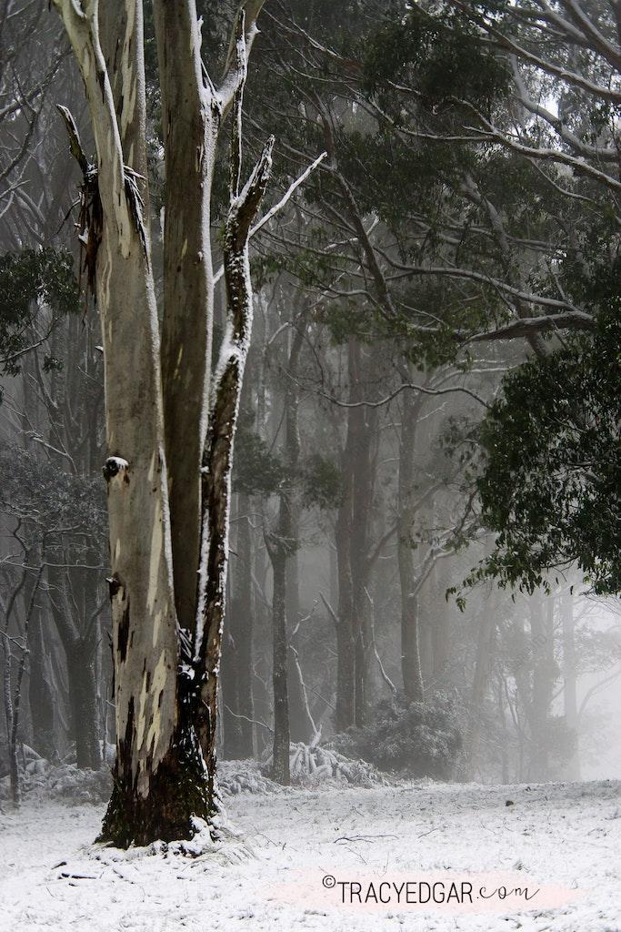Snowfall | Mt Macedon #22