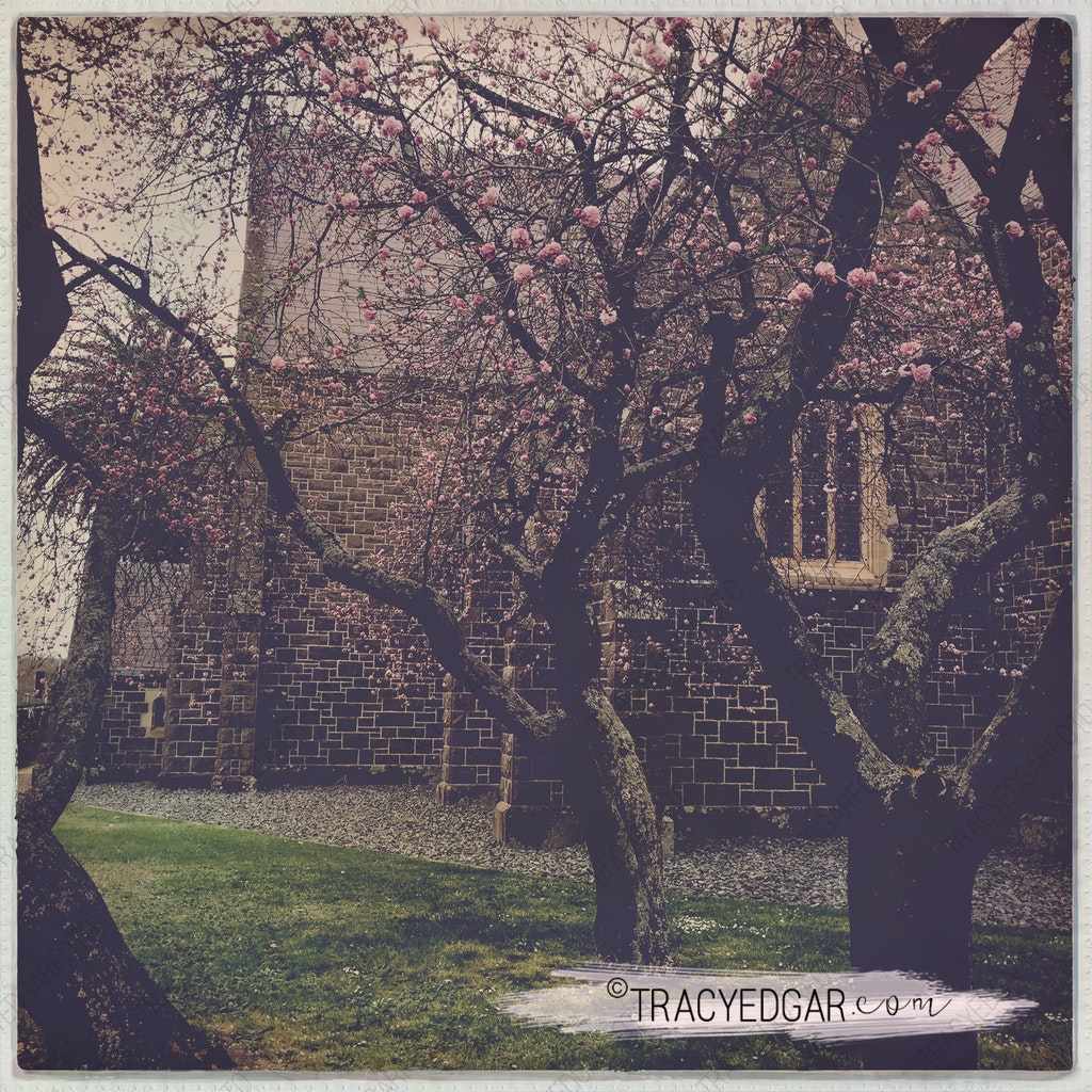 Blossoming Trees | St Patrick's Cathedral, Ballarat #8