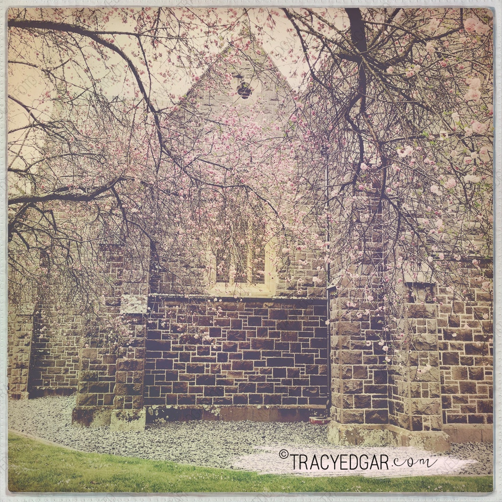 Blossoming Trees | St Patrick's Cathedral, Ballarat #9