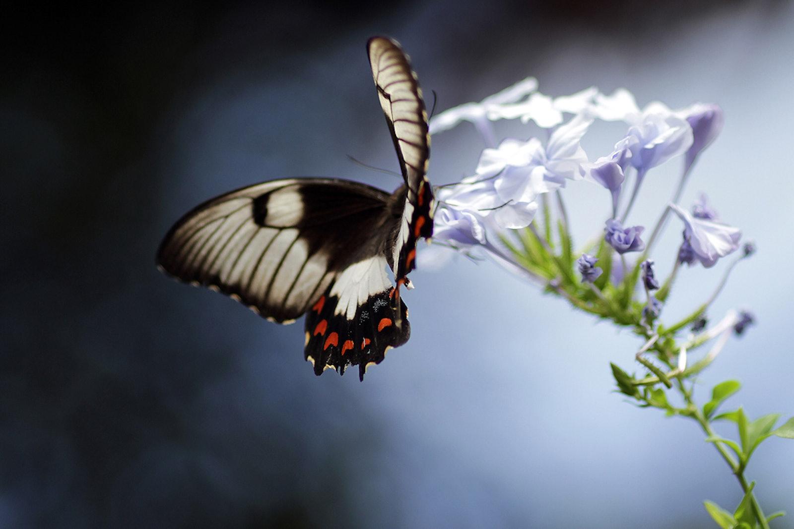 Butterfly_2011_5019
