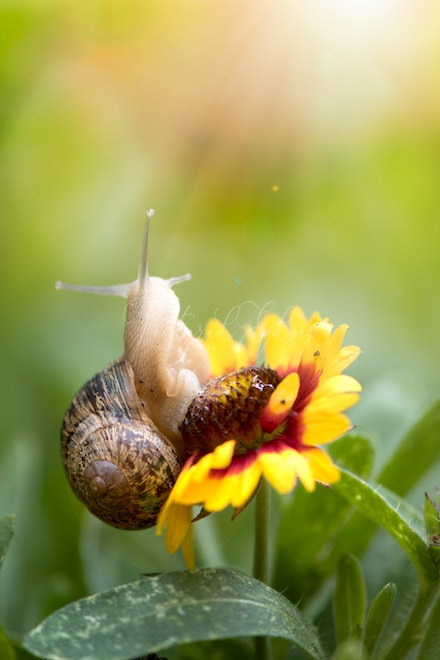 The snail who saw the light