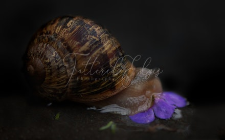 The snail who ate flowers in the dark