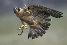 Leigh Valley Hawk & Owl Sanctuary
