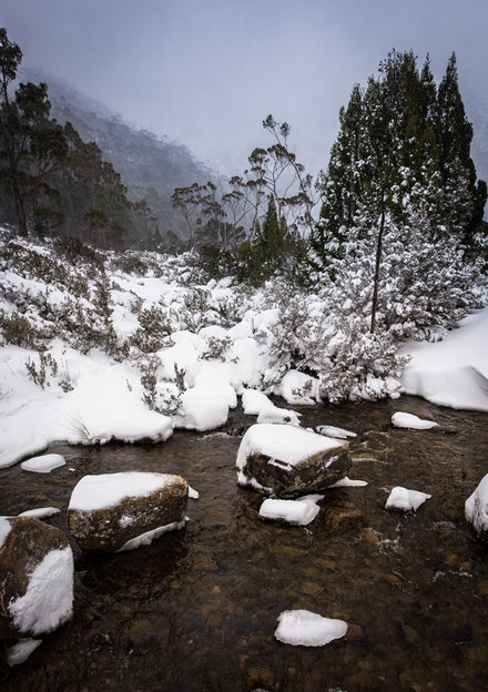 Mount Field National Park - A winter wonderland in Mt Field National Park during a big winter snowfall.