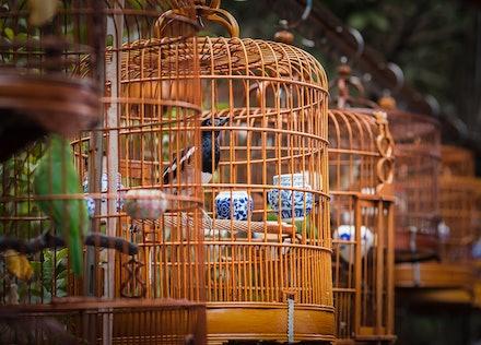 Hong Kong's Bird Market - Tucked away in Mongkok in Kowloon is Yuen Po Street Bird Garden. The garden offers a glimpse of the traditional culture of songbird...