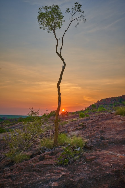 Sunset tree - A lone tree on the slope of the Nawurlandja lookout stands guard.