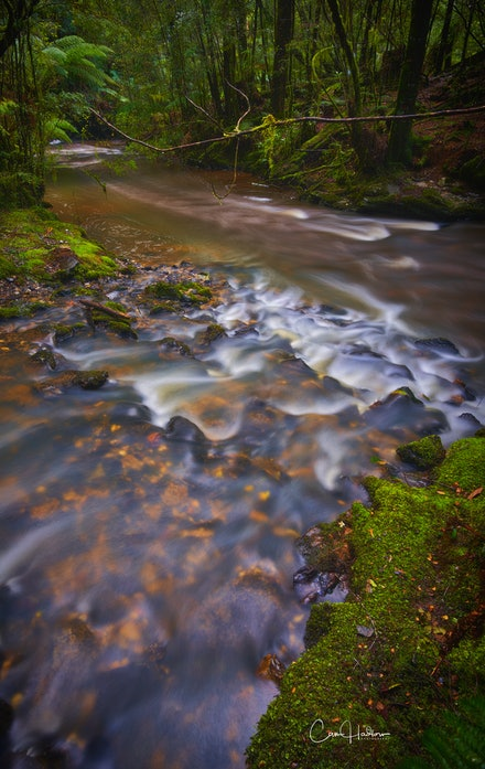 'Julius River' - The Julius River Forest Reserve on the Tarkine Drive Circuit is a wonderful place to explore a stunning rain forest walk.