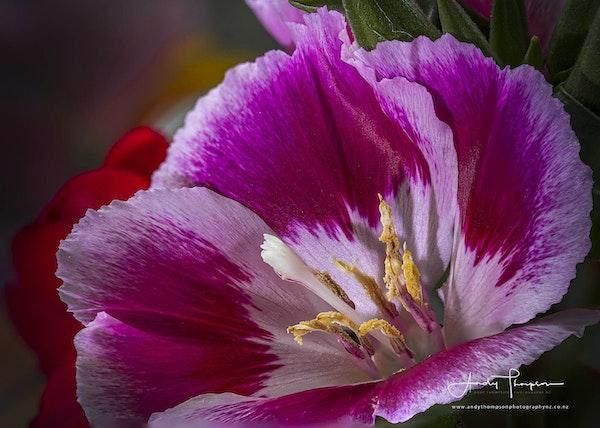 Flower 3ATPNZCopyrightWEB