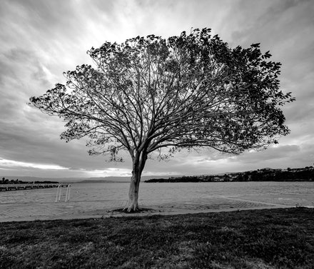 Black & White - Tree - Nature highlighting its own beauty!