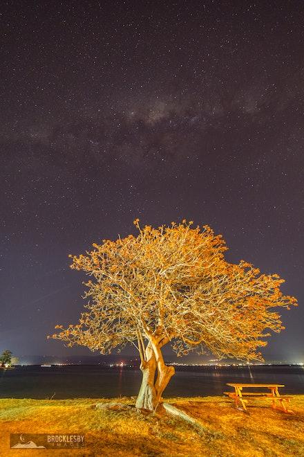 Glolden Tree Nightscape - A beautiful golden tree under the night sky.