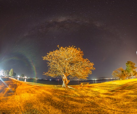 Glow Tree - Stitched Panorama, Glow Tree