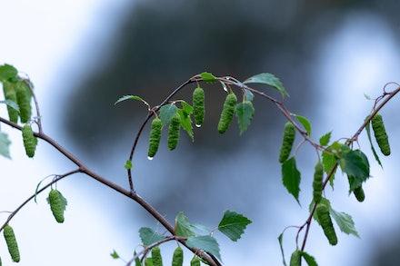 Foliage in the Rain