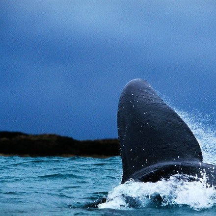Whale Tail. - The whale tale about the whale tail features in my blog.