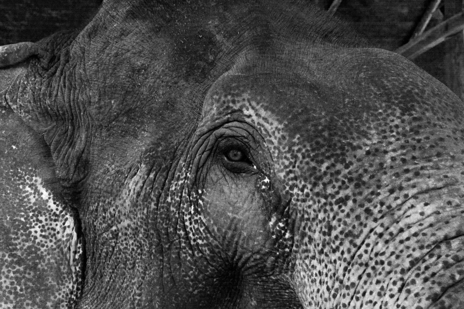 bw-laos-elephant-eye